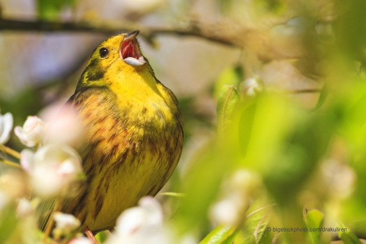 Can't Get That Song Out of My Head -Yellowhammer Singing