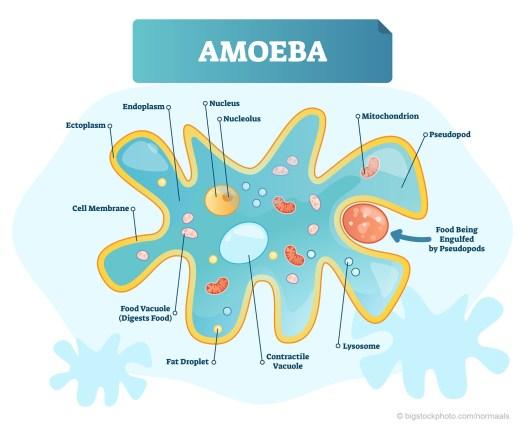 Amoeba Can Solve TSP
