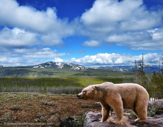 Keeping Balance in Nature with Bears