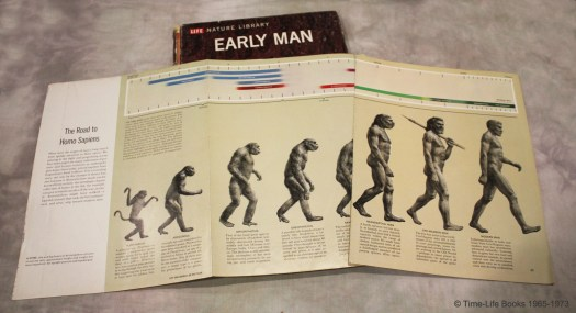 "Human Evolution ""The Road to Homo Sapiens"""