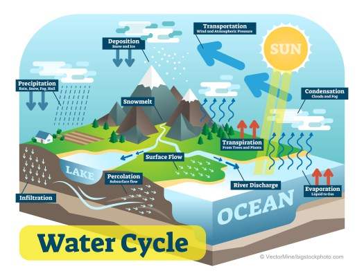 Water Cycle and Life