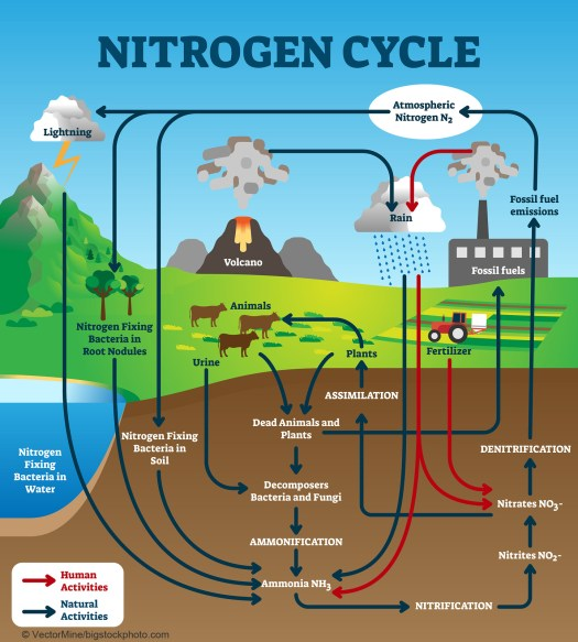 Nitrogen Fixation and Life