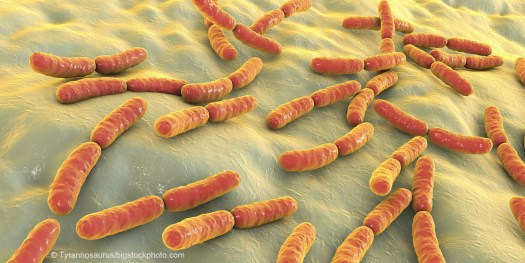 We Could Not Survive Without Bacteria