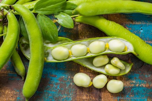 Chemical Warfare in the Plant World - Lima Beans