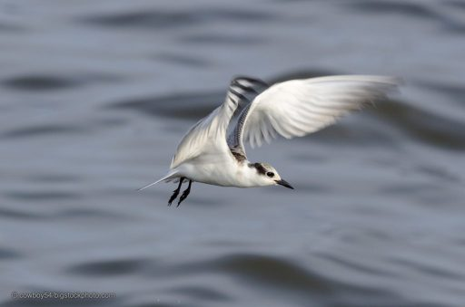Birds Can Predict Typhoons