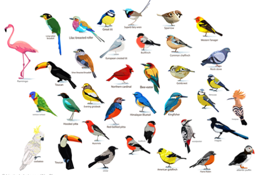 God's Diversity of Birds