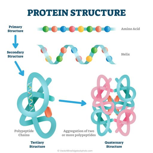 Understanding Proteins and How They Are Made