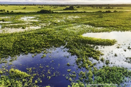 Why Do We Need Wetlands?