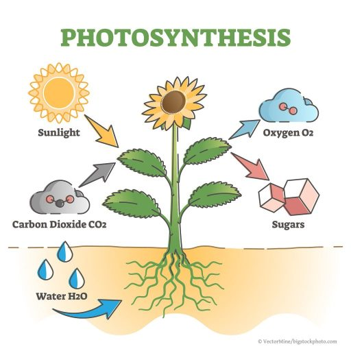 Complex Photosynthesis and Life