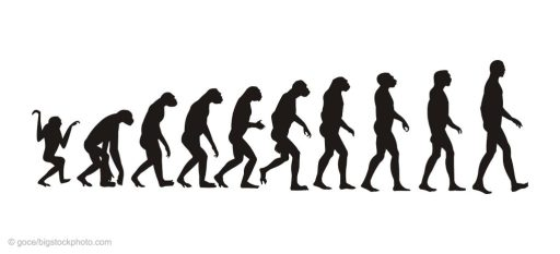 Fossil Apes and Human Evolution