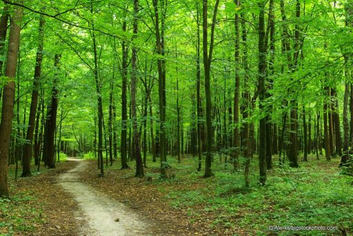 God's Solution for Climate Change -Forests
