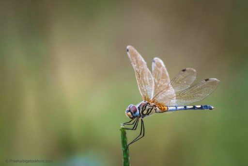 Missile Defense Systems and Dragonfly Brains