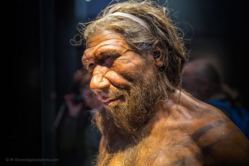Are Neanderthals Human Precursors in the Fossil Record?