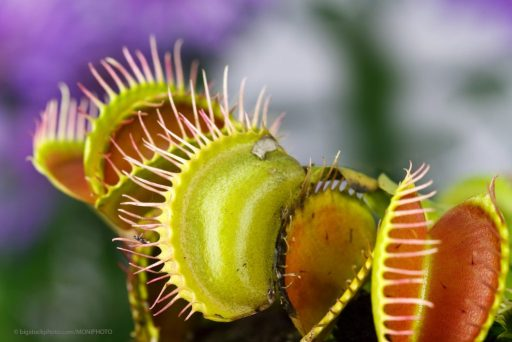 Plants use Magnetism