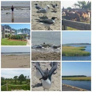 beach collage 3