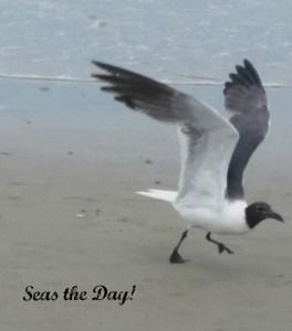 seagull wings spread