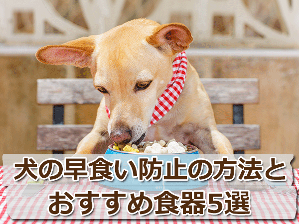 獣医の卵が伝授!犬の早食い防止方法とおすすめ食器5選