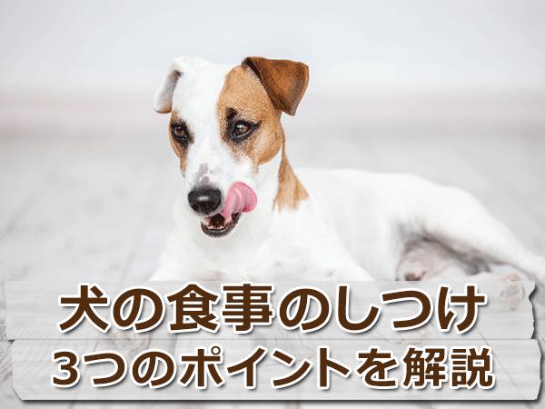 犬の食事のしつけ3つのポイント!飼い主次第でお利口に?