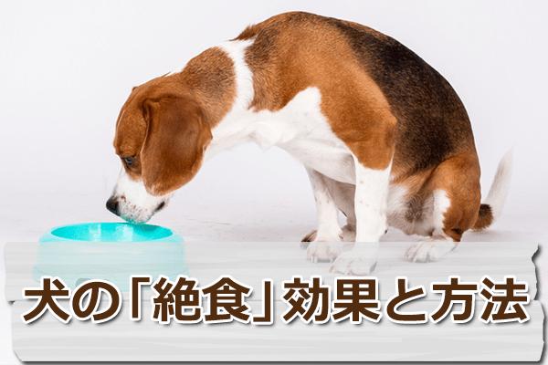 下痢や嘔吐にも有効!犬の絶食、効果とやり方を徹底解説