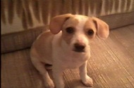 Rescue Puppy Rescues Family that Saved Her