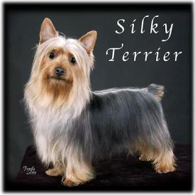 Family Tree Imaging Silky Terriers