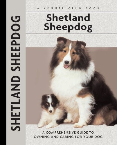 The Shetland Sheepdog Is Different From A Miniature Collie!