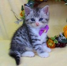 cat1608-00093_02