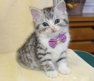 cat1608-00093_04