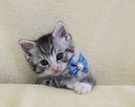cat1608-00094_02