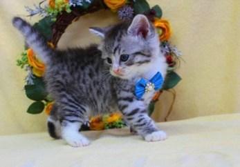cat1608-00094_04