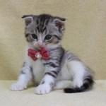 cat1608-00095_02