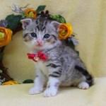 cat1608-00095_04