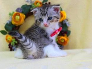 cat1608-00095_05