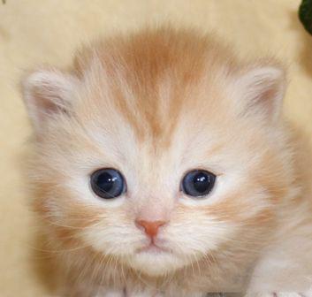 cat_img_1_150c772316f1