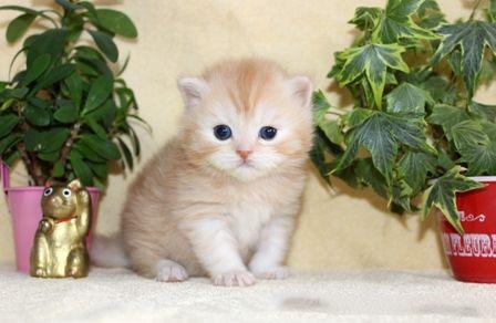 cat_img_4_bf4c9c410ce9