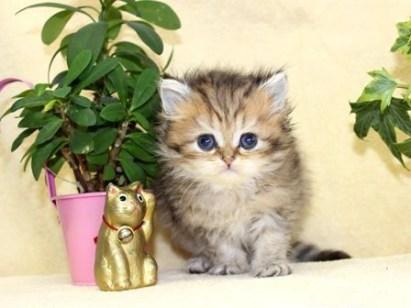cat_img_4_fddf5381aa18