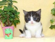 cat_img_3_1f8af6e9df98