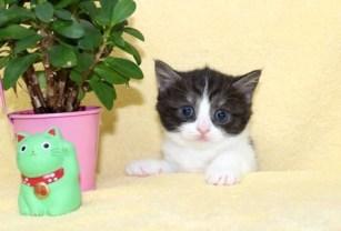 cat_img_5_7419653bd1e9