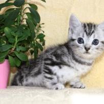 cat_img_2_a645ab87c109