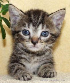 cat_img_3_47dc0e47e2c0