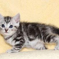 cat_img_4_04491595a673