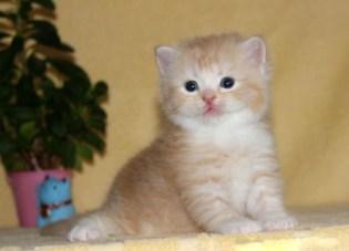 cat_img_5_9f8c417f8e49