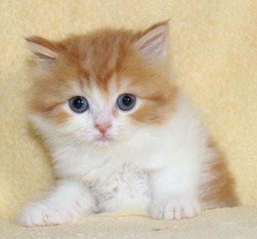 cat_img_5_a4041898f1d7