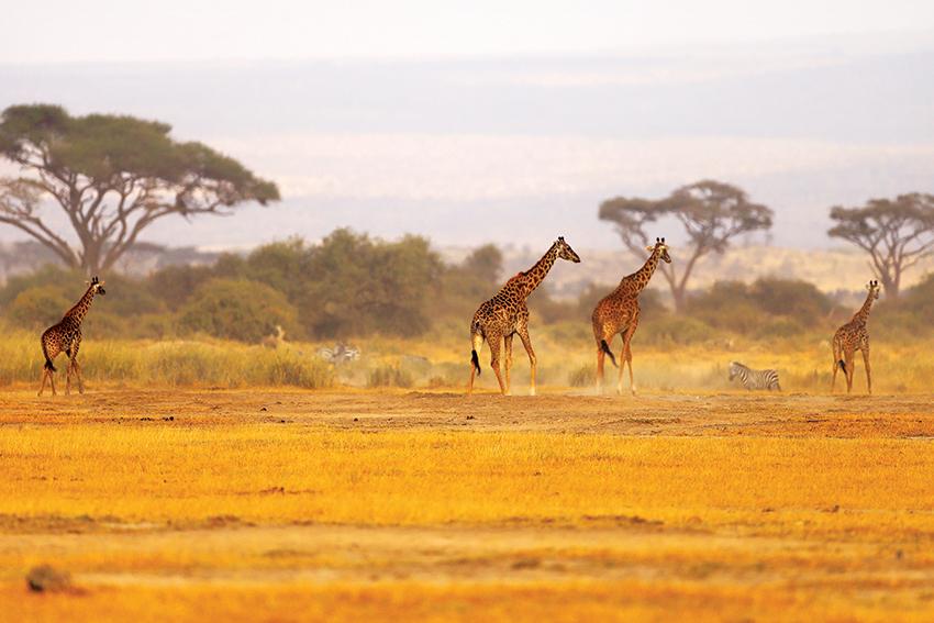 BD_MAGOO5_AFRIKA_0470_A