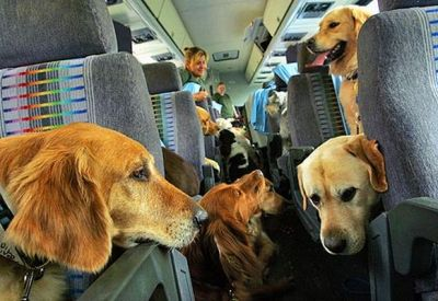 Safety   The Dog Advertiser