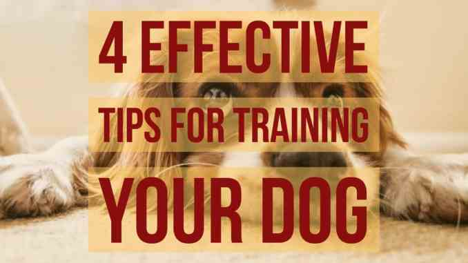 4 Effective Tips For Training Your Dog
