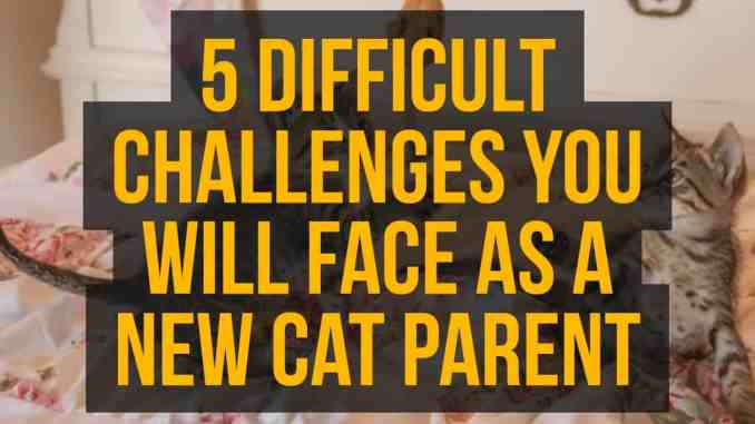 5 Difficult Challenges You Will Face As A New Cat Parent