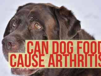 Can Dog Food Cause Arthritis