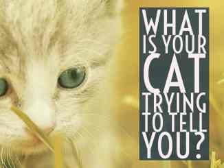 What Is Your Cat Trying to Tell You