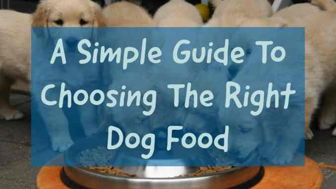 Guide to Choosing the Right Dog Food